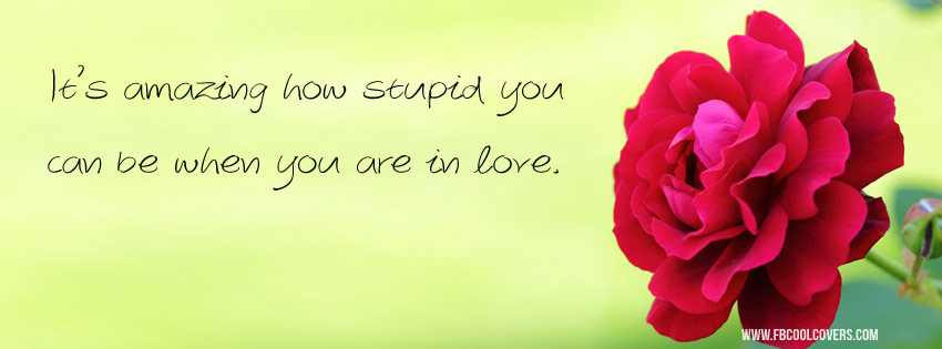 Stupid Love Quote Cover Photo Quotes Covers Fb Covers